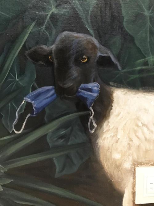 Persian Black-head Sheep